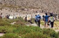 Randonnée de Machuca a Río Grande, désert d'Atacama