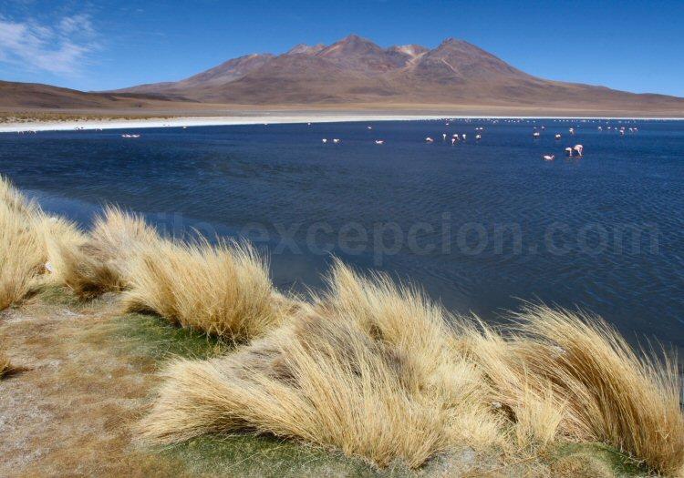 Laguna Cañapa, Bolivie