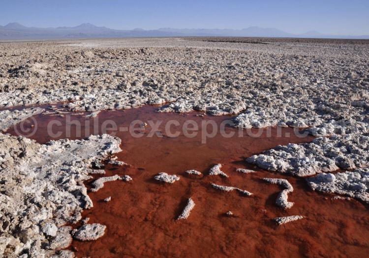 Laguna Chaxa, Salar d'Atacama