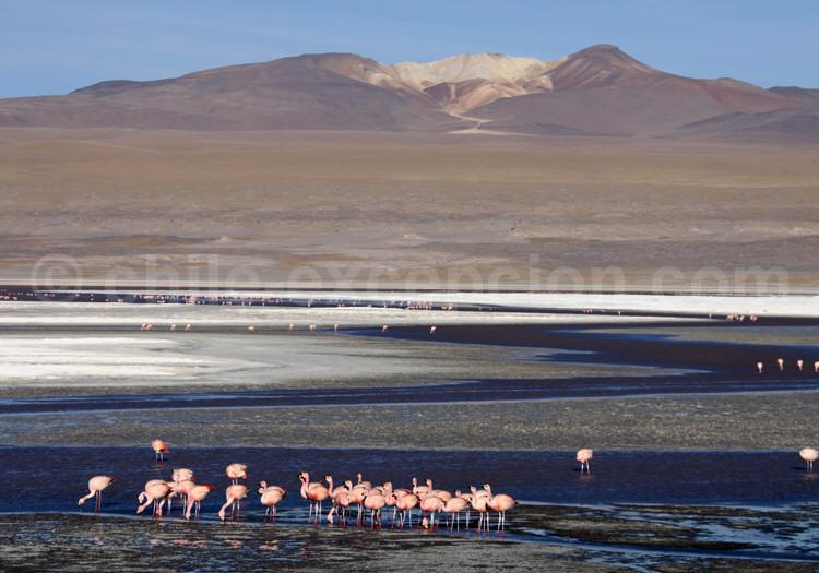 Laguna Colorada, route des Joyaux