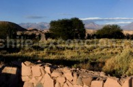 Plantations autour de San Pedro & Volcan Licancabur, Région Atacama, Chili