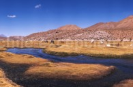 Bofedal du village de Macucha, route du Tatio