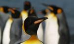 Nos croisières en Antarctique