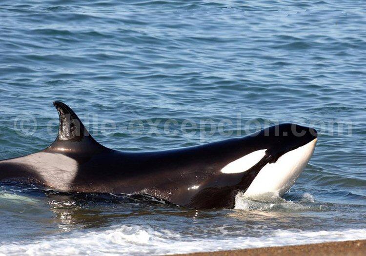 Orque, Orca. Estancia La Ernestina