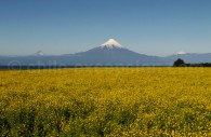 Le volcan Osorno depuis les environs de Frutillar
