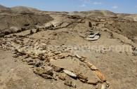 Parc Paléontologique de Caldera, fossiles de baleine, Bahia Inglesa