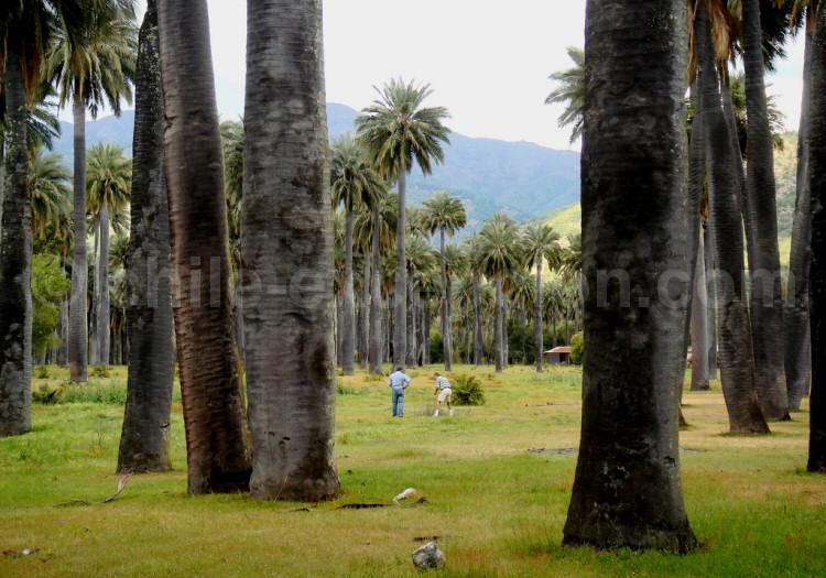 Parc national Las Palmas de Cocalán