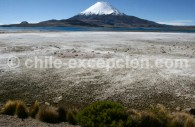 Volcan Parinacota, Parc Lauca
