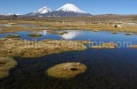 Volcans Parinacota et Pomerape, Parc Lauca, Région d'Arica et Parinacota