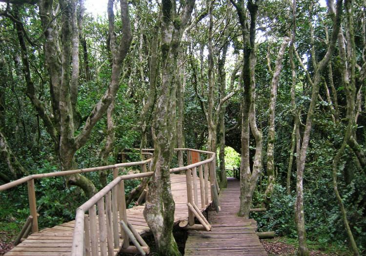 Parc Bosque Fray