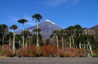 Volcan Lanín depuis le bord de la lagune Huinfiuca