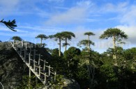 Piedra del Aguila, Parc National Nahuelbuta. Crédit Evelyn Amaza