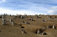 Monument naturel Los Pingüinos, isla Magdalena. Crédit Hector García