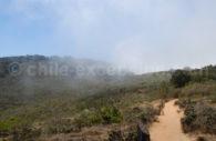Bosque de Fray Jorge, UNESCO, réserve mondiale de la biosphère, Coquimbo au Chili avec Chile Excepción