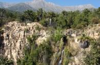 Parc national La Campana, secteur Palmas de Oca. Crédit Felipe Cancino