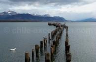 Puerto Natales, Patagonie chilienne