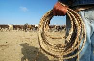 Dans une estancia, le rodéo burro - Gentileza Sernatur III Region de Atacama