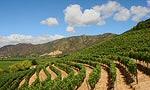 Route des vins au Chili et en Argentine
