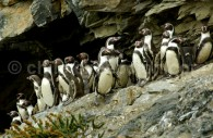 Réserve nationale Pingüino de Humboldt