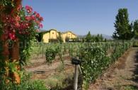 Viña Anakena, vallée du Calchapoal
