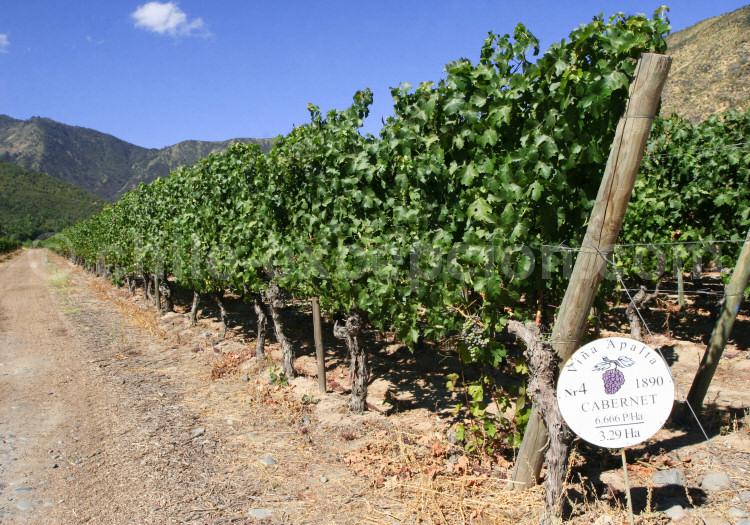 Cabernet, Viña Neyen de Apalta, vallée de Colchagua