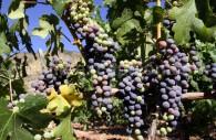 Cabernet, Viña Neyen de Apalta vallée de Colchagua