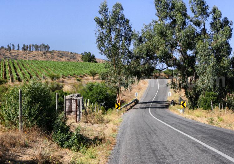 Vallée de Casablanca, route de la Bodega Matetic