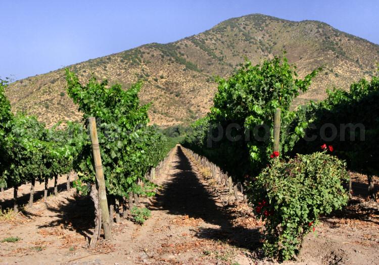 Vignes de Santa Rita, Maipo