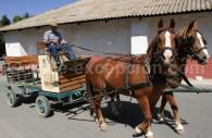 Visite de la Viña Santa Rita, Maipo