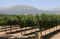 Vignes de Viña Pérez Cruz, Maipo
