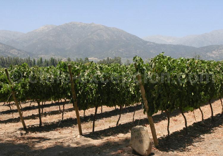 Vignoble à San Pedro Cachapoal Andes