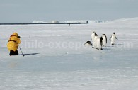 Rencontre avec les manchots empereurs, Péninsule Antarctique. ©Lynn Woodworth