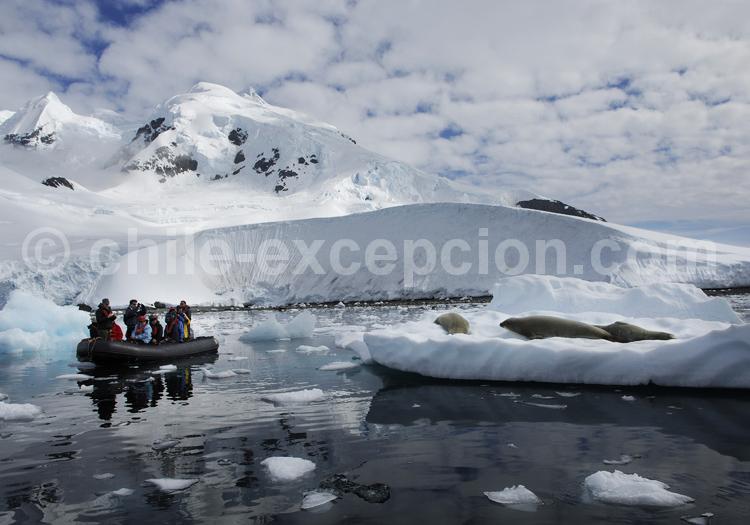 Une excursion en zodiac près des phoques ©C. Lepetit