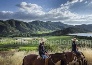 Promenade equestre à la viña Vik