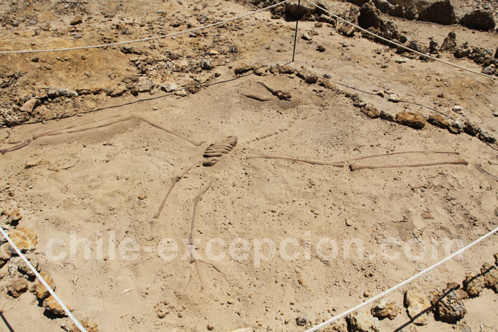 Fossile du Parc Paléontologique Caldera, Bahia Inglesa
