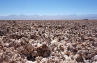 Laguna Chaxa, au sud de San Pedro de Atacama, Chili