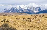 Paysage du Parc Torres del Paine, Chili