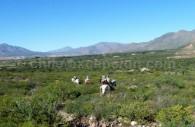Escapade dans les vallées Calchaquies
