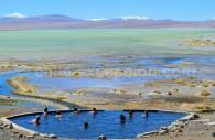 Thermes de Polques, laguna Chalviri, Bolivie