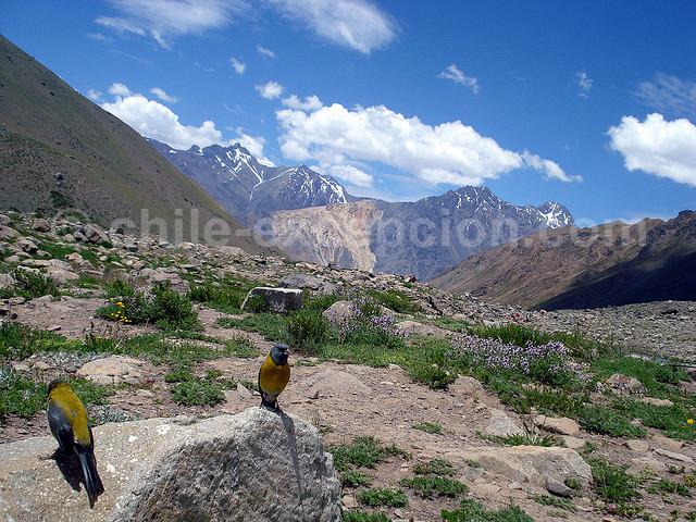 Parc naturel El Morado avec l'agence de voyage Chile Excepción
