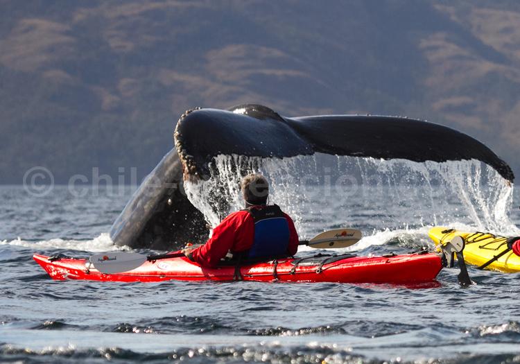 A la rencontre des baleines © Luis Bertea