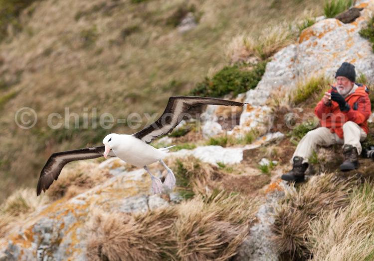 Observation des oiseaux de mer © Luis Bertea