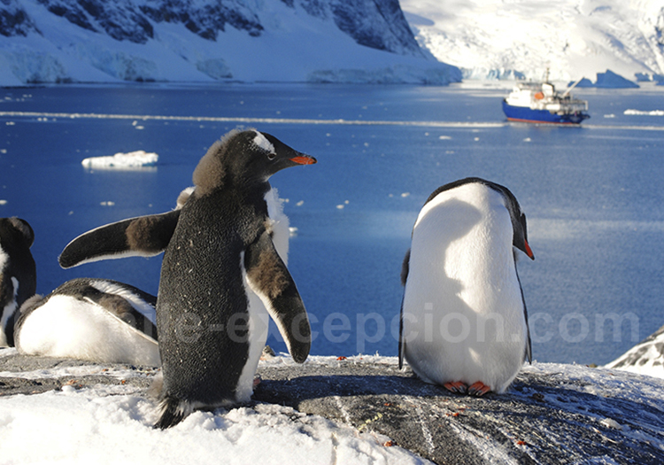 Baie Paradise, péninsule Antarctique. © Ralf Plechinger