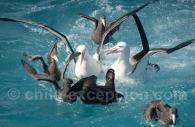 Oiseaux marins – Crédit Erwin Vermeulen