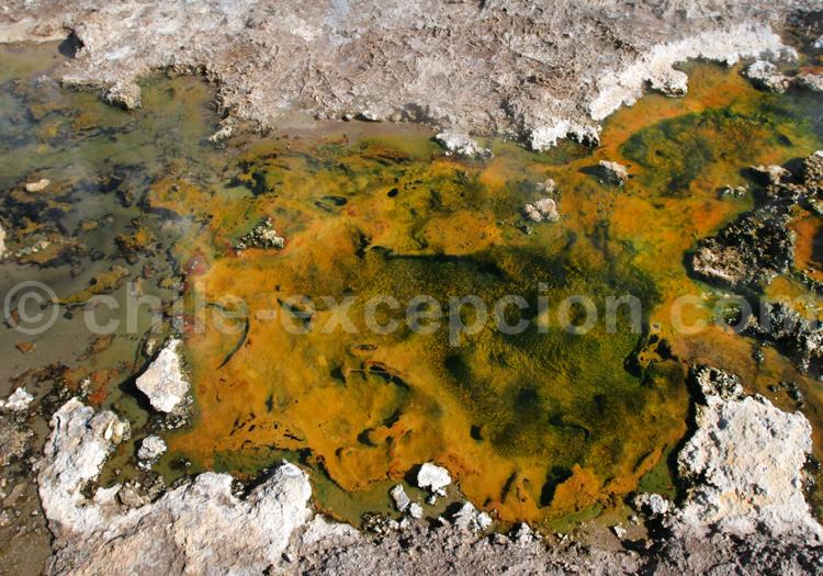Mofettes, geysers del tatio, Atacama