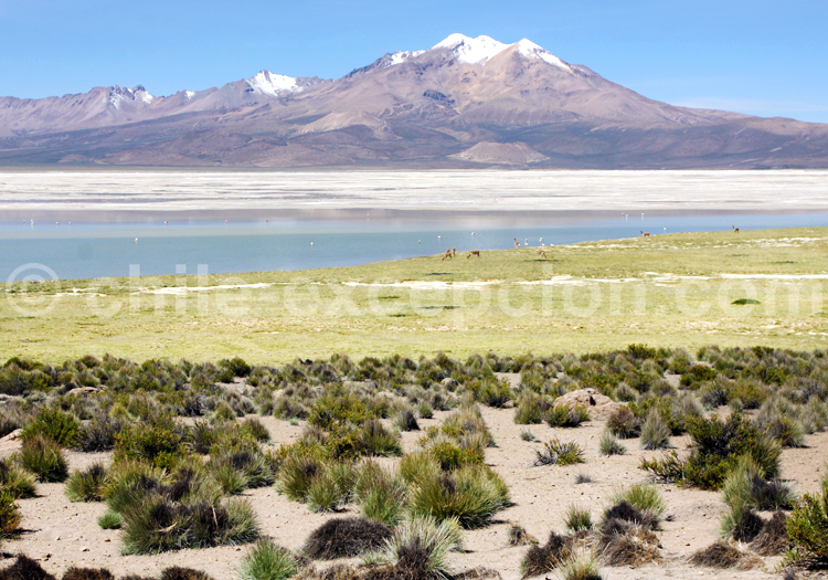Panorama, Salar de Surire, Chile
