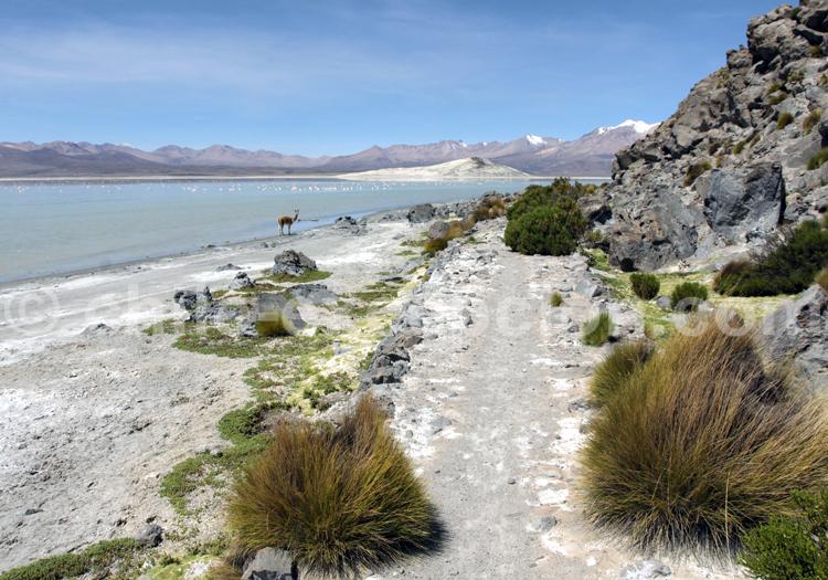 Une lagune dans le Salar de Surire au Chili