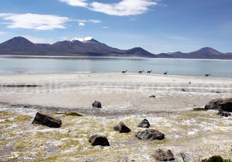 Salar de Surire désert du Chili