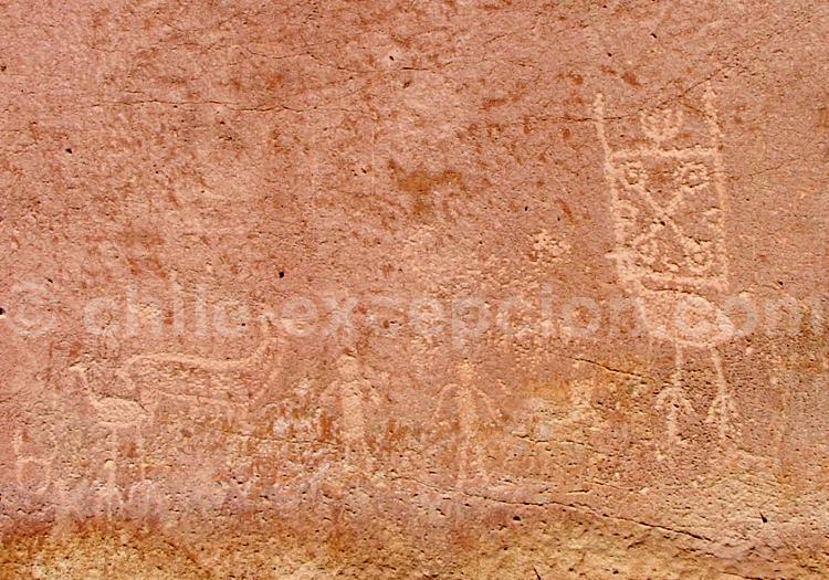 Ñandou, Yerbas Buenas, Atacama