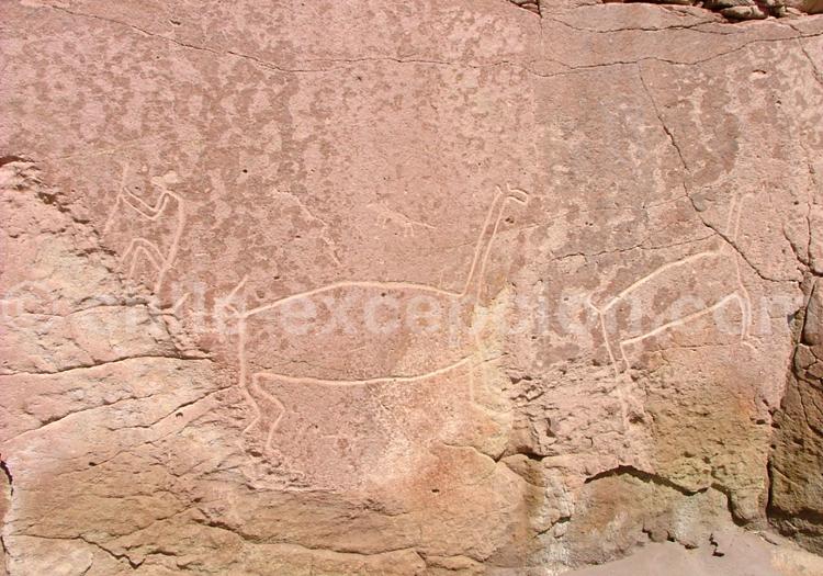 Pétroglyphe, Hierbas Buenas, Atacama